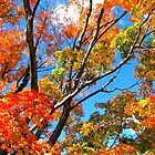 Colors of Fall by Charlotte Hertler