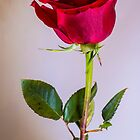 A Rose by any other name by Glen Allen