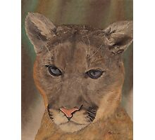 Cougar Pride Photographic Print