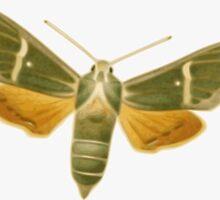 Moth Friend by yeahnoyeah