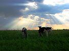Holy Cows by Leanna Lomanski