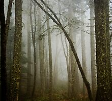 Misty Woods by LawsonImages