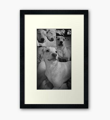 Pretty Posing Puppies Framed Print