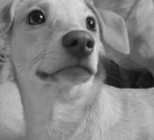 Pretty Posing Puppies Sticker