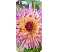 Dahlia Hayley Jane | Upper Brookville, New York iPhone Case/Skin