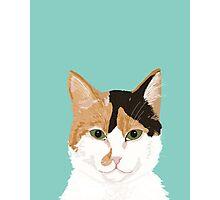 Calico Cat - Cute cat black, white, tan, orange tabby cat, cute kitten Photographic Print