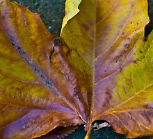 Autumn Leaf by DavidFrench
