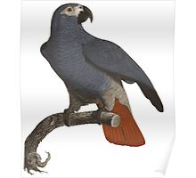 Alfredo the Parrot Poster
