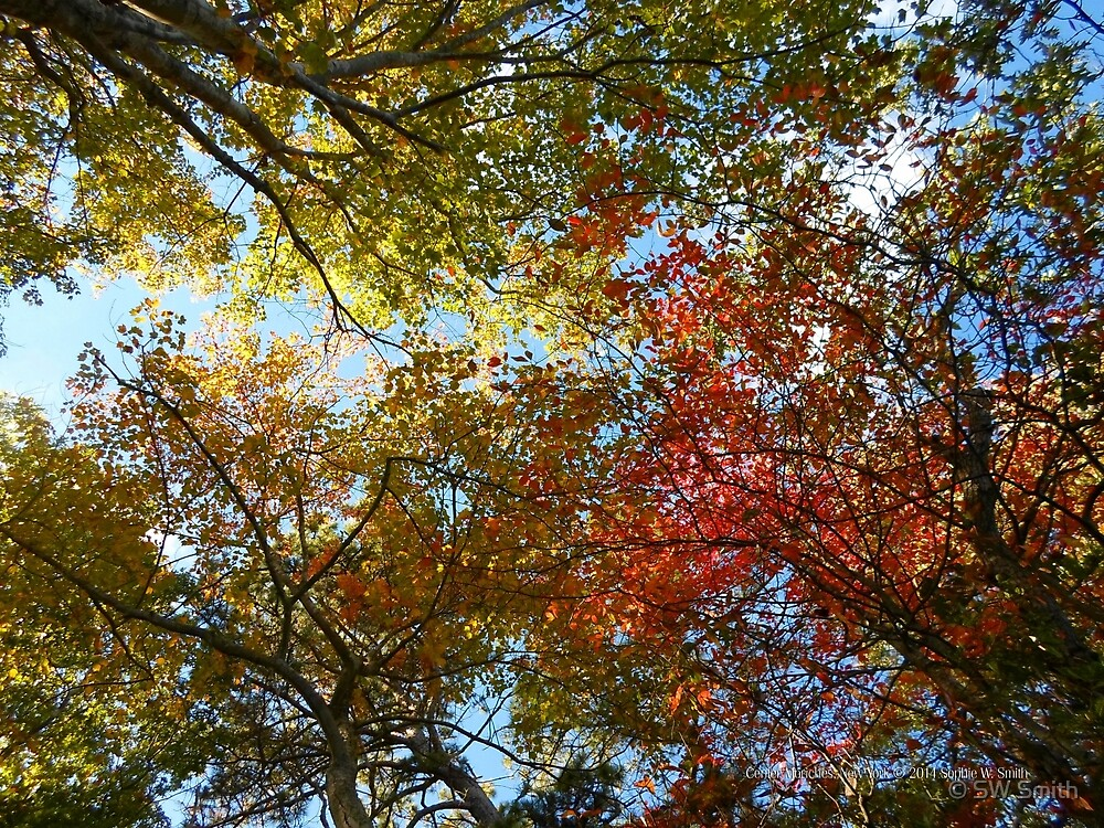 Colorful Treetops   Center Moriches, New York by © Sophie W. Smith