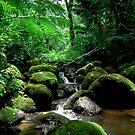 Manoa Stream by kevin smith  skystudiohawaii