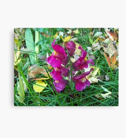 Autumn Suprise Canvas Print