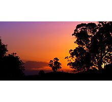 Sunset Gums - Cobbitty, NSW Photographic Print