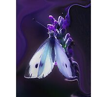 The Lavender Love Affair... Photographic Print