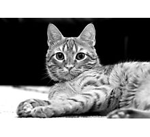cats have nine lives Photographic Print