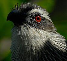 Bird by Ed Barnett