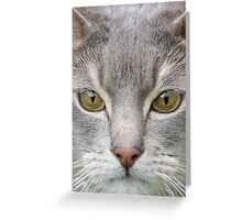 Cats eyes looking at camera close up Greeting Card