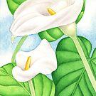 Calla Lilies by joeyartist