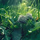 mushrooms by mayschneider