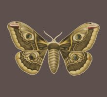Moth of the Month by yeahnoyeah