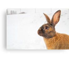 Bruce in the Snow Canvas Print