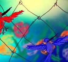 Humming birds thru fence by Anna  Lewis