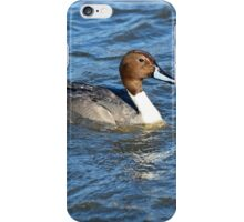 Northern Pintail Duck iPhone Case/Skin