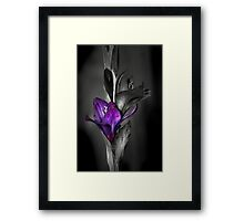 Color me Purple Framed Print