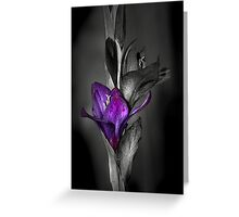 Color me Purple Greeting Card