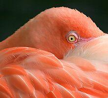 Flamingo  by Tina Dial