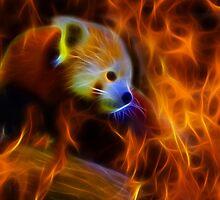Red Panda by Melanie Deroon