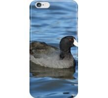 American Coot iPhone Case/Skin
