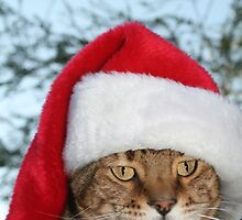 Santa Cat by cindylu