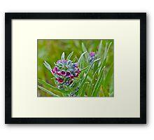 Wild Framed Print