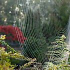 No One Home in the Web by lizalady