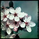 Blossom by Melanie  Dooley