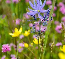 Little Flowers on the Prairie by Jason Weigner