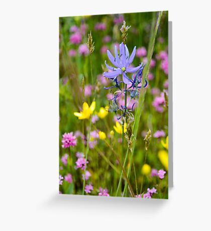Little Flowers on the Prairie Greeting Card