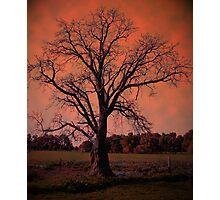 'LINES, SHADOWS, SKY @TREE...!' Photographic Print