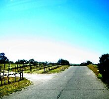 Wine country road by SamanthaJune