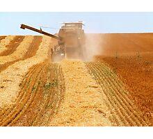 """Bringing in the Harvest"" Photographic Print"