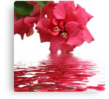 Beauty of Hibiscus Canvas Print