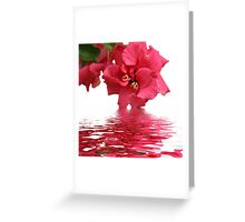 Beauty of Hibiscus Greeting Card