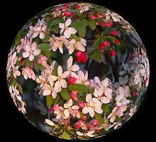 Blossom Ball by Peter Hammer