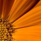 Sunburst by Tara Mitchell