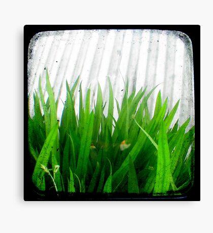 Green Green Grass Canvas Print