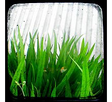 Green Green Grass Photographic Print