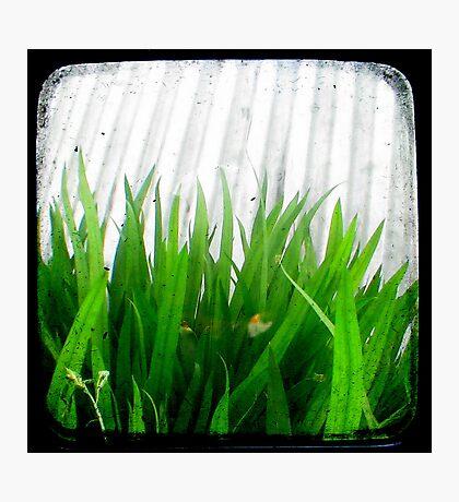 Green Green Grass Photographic Print