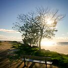 Sunrise Over Park Bench - Tallebudgera Gold Coast by Brad Walker