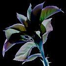 Rose Invert by Marsha Tudor