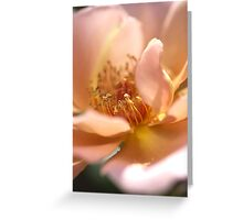 Pink with a Golden Touch Rose Greeting Card